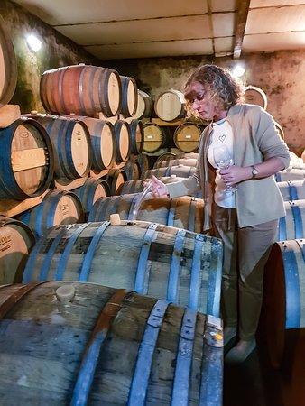 Mellasat Vineyards: Cellar Tasting
