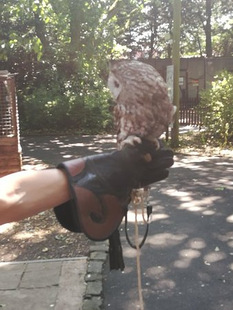 Turbary Woods Owl and Bird of Prey Sanctuary Foto