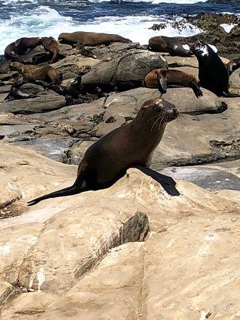 2-uur durende La Jolla Segway-ervaring: Sea Lions