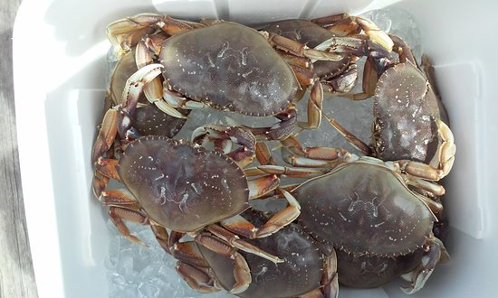 Winchester Bay RV Resort: Lots of Big Crab!