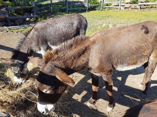Ranch Campo: Lieu convivial, personnel au petit soin !!