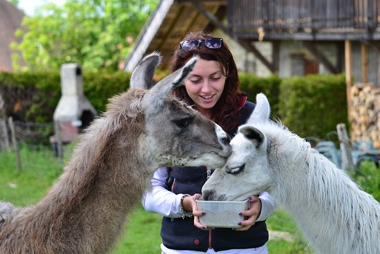 Ferme aux Lamas du Doubs