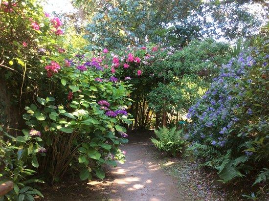 Petite allée fleurie - Picture of Jardin Botanique de Vauville ...