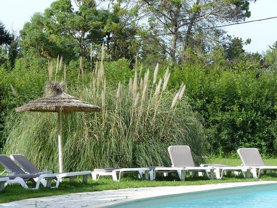 transat aux abords de la piscine - Photo de Restaurant L ...