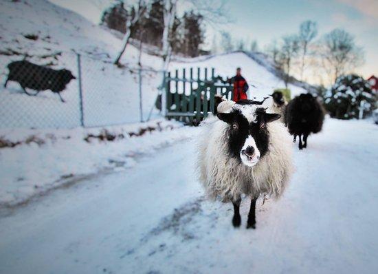 Øvre-Eide Gard - Farm: Winter on the farm.