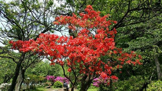 Sankeien Gardens: Color!