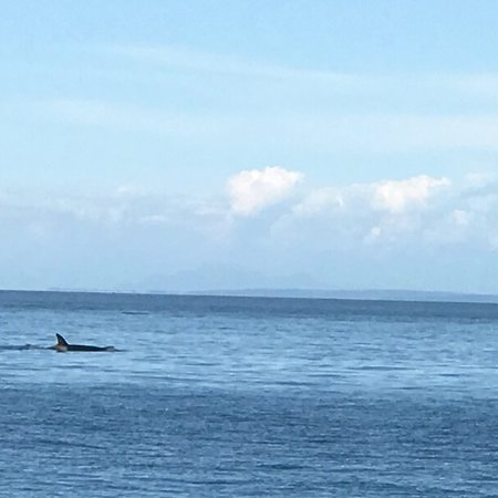 Outer Island Expeditions: Beautiful scenery & day watching whales!