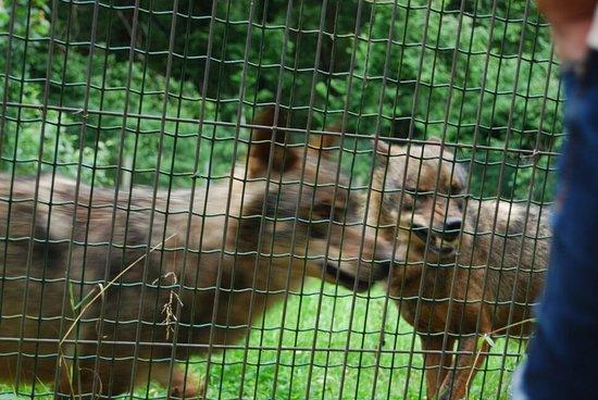 Belmonte de Miranda, Spain: La Casa del Lobo