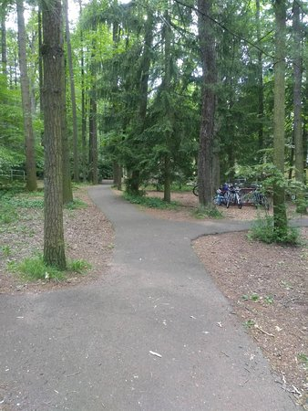 Lovely Wooded Paved Path Next To The Jigger Shop!