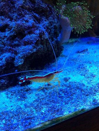 Jax Fish House & Oyster Bar: aquarium