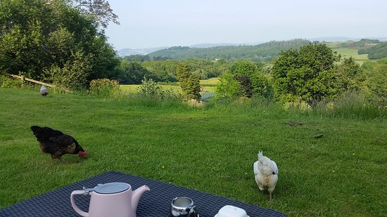 Rowen, UK: Tea with a view!...with locals!