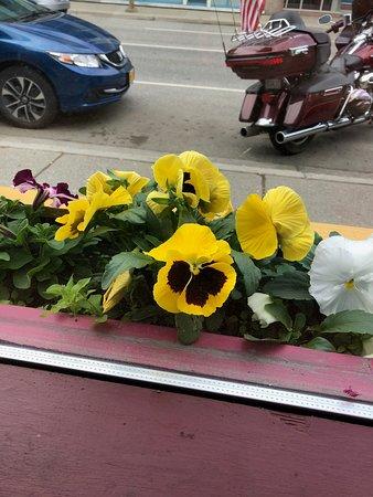 Humpy's Great Alaskan Alehouse: Beautiful flowers on the windowsill!