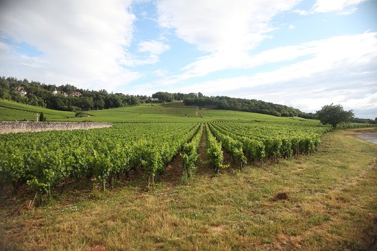 Office de Tourisme du Grand Chalon - Antenne de Givry: Entre collines et vignobles : cles vignes