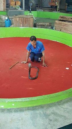 写真Phuket Cobra Show and Snake Farm枚