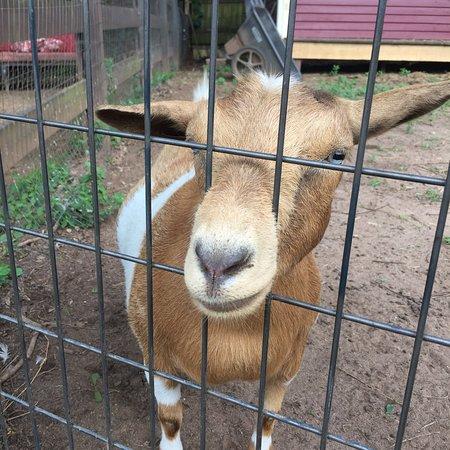The Social Goat Bed & Breakfast: photo6.jpg