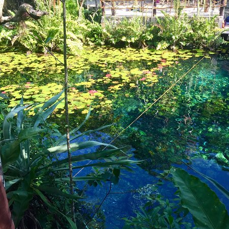 Cenotes Dos Ojos: photo1.jpg