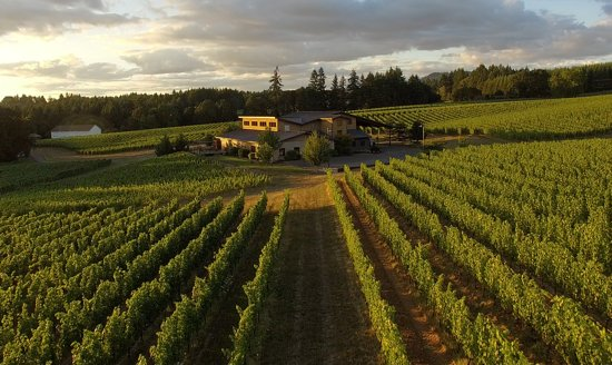 Newberg, OR: Trisaetum Winery, Ribbon Ridge AVA, Summer