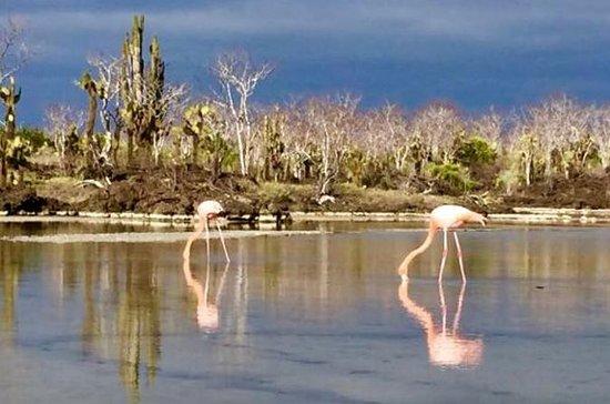 4 Tage Galápagos und San Cristobal...