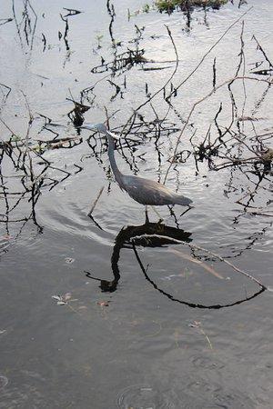 Spirit of the Swamp Airboat Rides照片