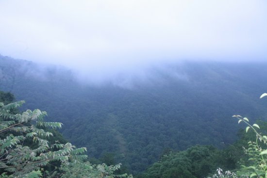 Mangalore to Bangalore Dream Route: Shiradi Ghat morning View, For more info Call Wilson Menezes 9845684754