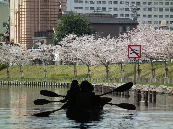 Outdoor Sports Club ZAC: 桜とカヤック(Cherry&kayak)