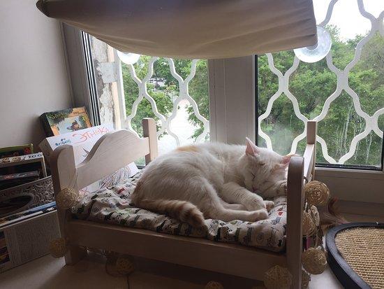 Cat Cafe Valeryanych照片