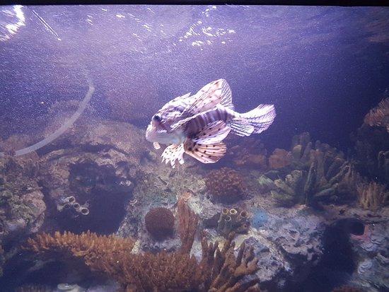 里斯本海洋馆照片