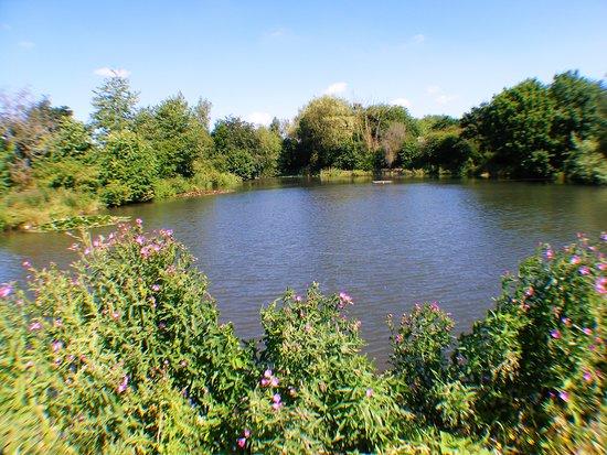 Bulwell Hall Park: Fishing Ponds.