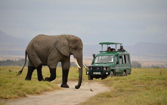 Kel Safaris