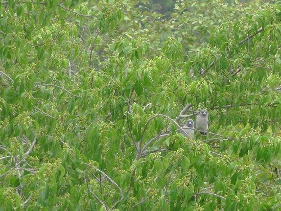Фотография Sundarban