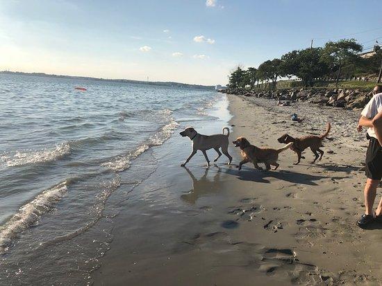 Nahant, MA: Dogs just having fun