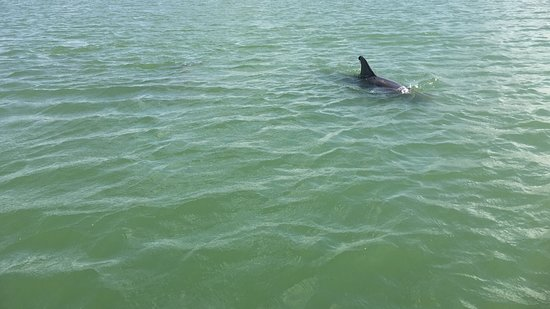 Dolphin Connection Texas