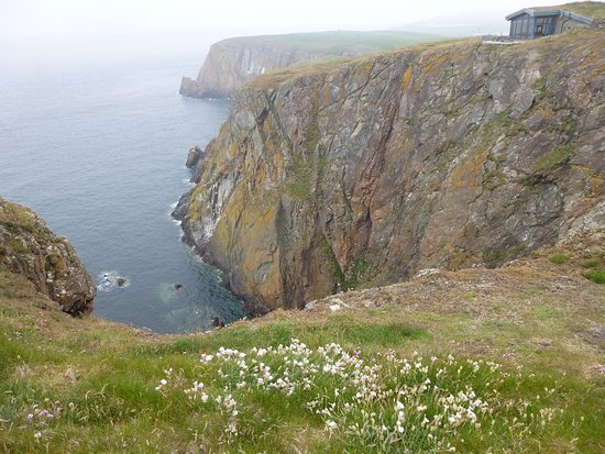 Mull of Galloway, UK: Amazing cliffs where lots of birds nest and rest