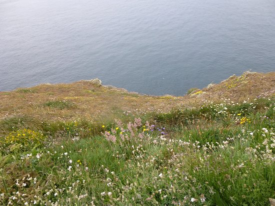Mull of Galloway, UK: Fantastic wild flower meadows with lots of butterflies