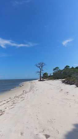 Alligator Point, FL: Peace and quiet - Bald Pt St Park