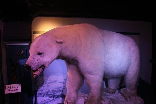 Natural History Museum照片