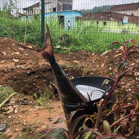 Santo Antonio, São Tomé e Príncipe: Smorgens gevangen savonds op je bord 😀😀😀👍🏼👍🏼
