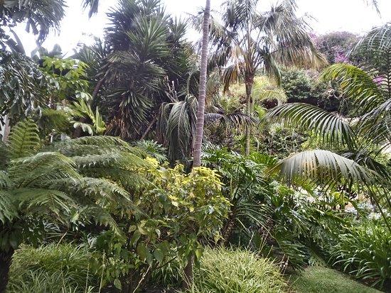 Blue Sea Costa Jardín & Spa: Jardines estupendos