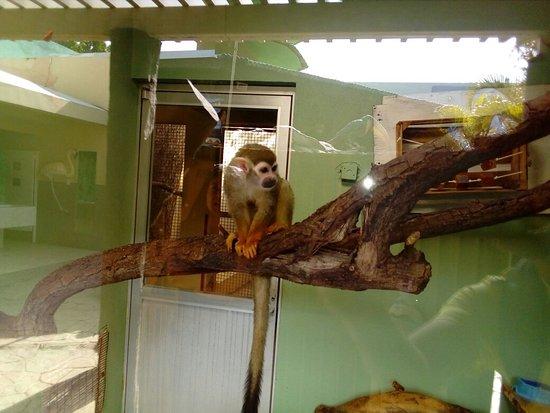 ซิวดัดวิกโตเรีย, เม็กซิโก: Parque Tamatan