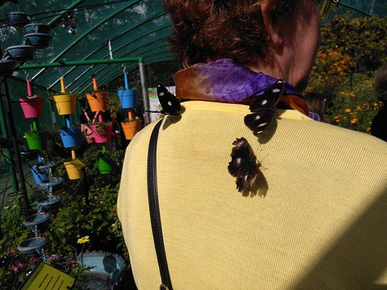Bribie Island Butterfly House: If you're wearing the right colours they come and land on you.
