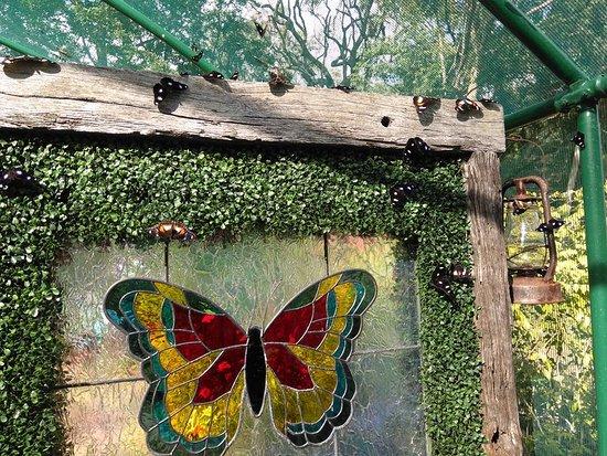 Bribie Island Butterfly House: Butterflies everywhere you look.