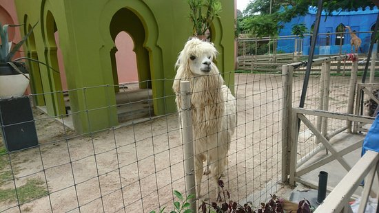 Camel Republic: DSC_1788_large.jpg