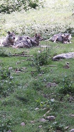 Bilde fra Parc Alpha