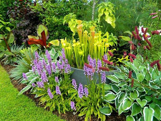 Douentza Garden
