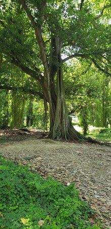 Havana Forest Foto