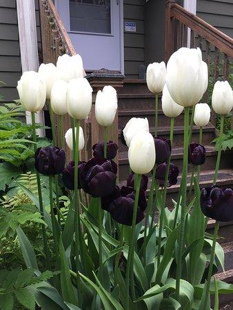 Custom Juneau Tours: Flowers at the arboretum!