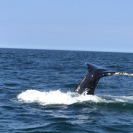 Granite State Whale Watch Foto