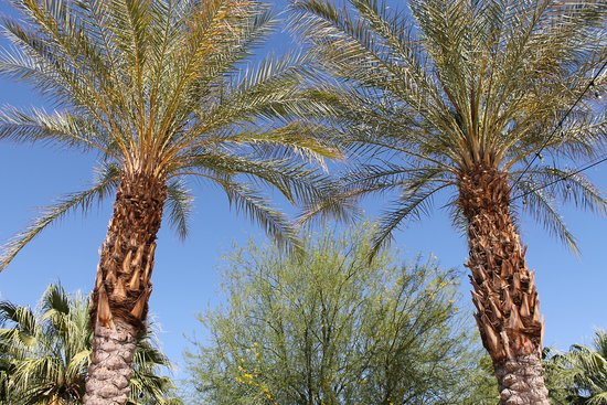 Palm Springs Art Museum in Palm Desert: Palms