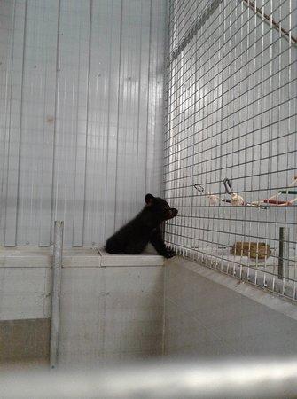 Zoo de Falardeau: Bébė urs de la pouponnière