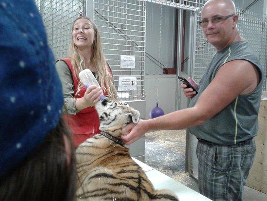 Zoo de Falardeau: Bébé tigre en train de boire